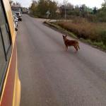 Собака попрошайка и выезд на встречную