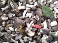 Маринованные грибы сыроежки в домашних условиях